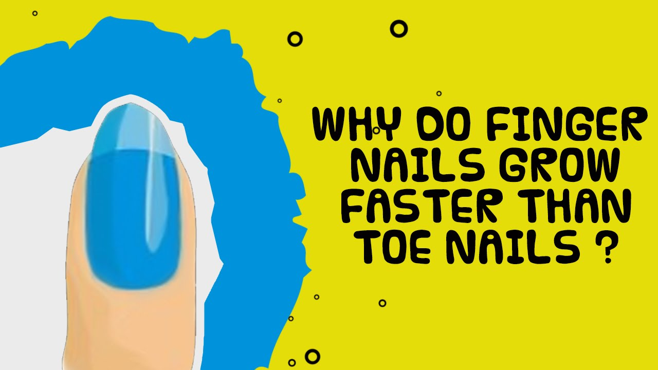 Facts about Nails | Why do Finger Nails Grow? | Facts about Human ...