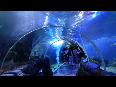 National SEA LIFE Centre Birmingham - FULL TOUR