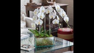 ОРХИДЕИ В ПЕРИОД ОТПУСКА 💐 РАСТЕНИЯ В ПЕРИОД ОТПУСКА 🍀 #oldenburg.ru #petropawlowsk.tv #orchids