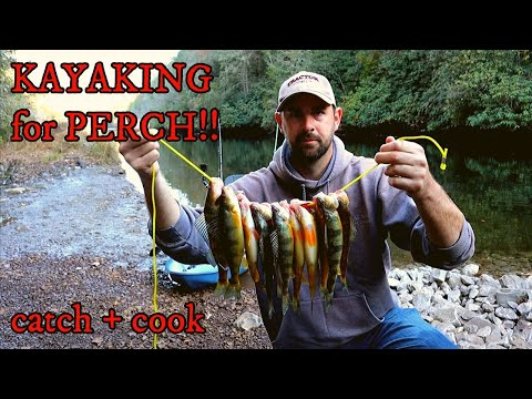 Slaying Yellow PERCH (Catch And Cook)