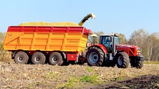 Mais hakselen Mart Munsters Deurne | KRONE BIGX 700 Massey Ferguson 8470 7495 Veenhuis USA Equipment