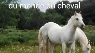 Proverbes et citations en rapport avec les chevaux
