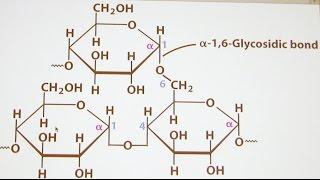 Ahern's Biochemistry #17 Carbohydrates II