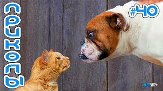 КОШКИ 2019 КОТЫ ПРОТИВ СОБАК | Приколы с котами Смешные кошки 2019 | Funny Cats #40