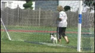 Sit Means Sit Dog Training - Toms River & The Jersey Shore
