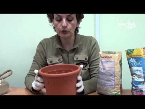 """Как выращивать каллы. Сайт """"Садовый мир"""""""