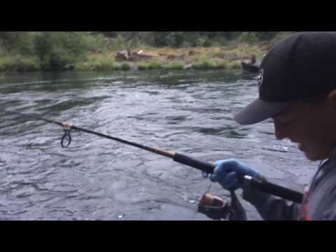 Santiam River Fishing