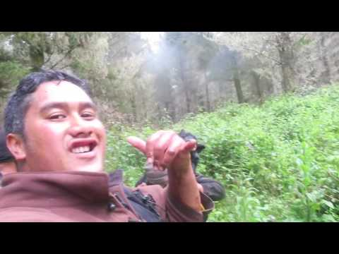 POAKA | NZ PIG HUNTING || LifeWithTheBarretts Vlog #015