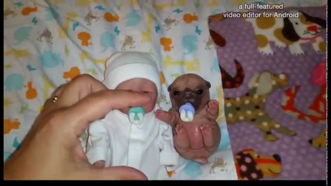 10 Quot Full Body Preemie And Baby Pug Silicone Youtube