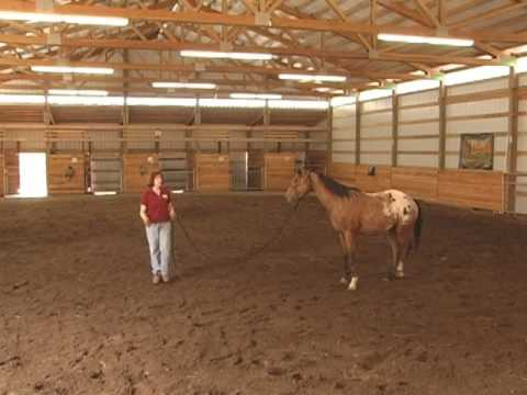 Horse Clinic Highlights with Gentle Horse Trainer Missy Wryn