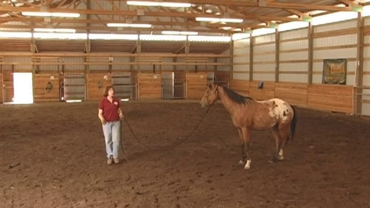 Horse Clinic Highlights with Gentle Horse Trainer Missy Wryn - YouTube