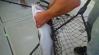 Chicago Lake Michigan Fishing- Huge 18# Chinook Salmon Action