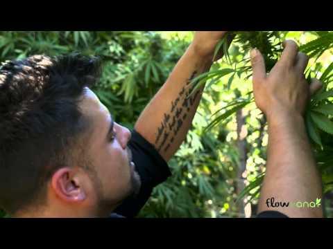 Meet your farmer with Flow Kana - Aficionado