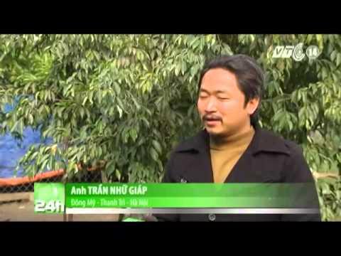 Các Loài Chim Trong Sách Đỏ Việt Nam