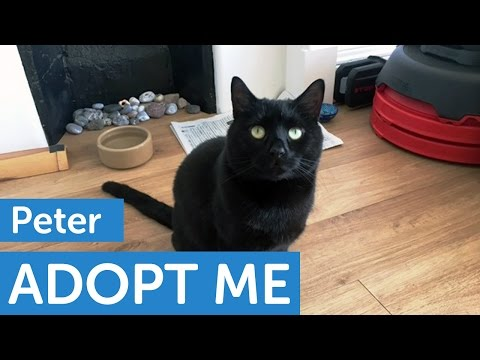 Adopt Peter | Cats | The Mayhew