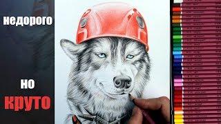 На что способны недорогие цветные карандаши в руках опытного художника? Тест и обзор.