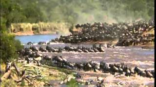 Download The Great Migration of the Animal's in Serengeti 480P Mp3 and Videos