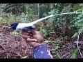 Pikat Burung Tali Pocong Di Dalam Hutan Seru Banget Pakai Mp3