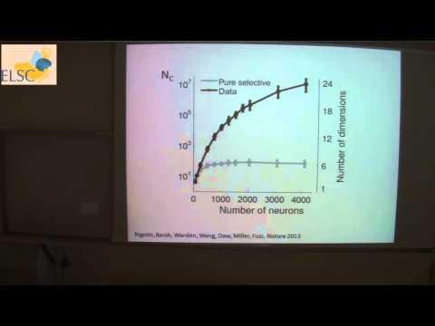 The Daniel Amit Lecture 2013-2014