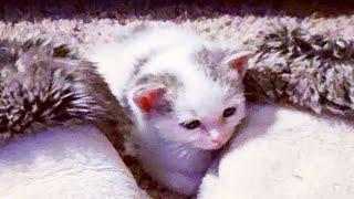 В бревне сидел 2-недельный котенок и тихо звал маму