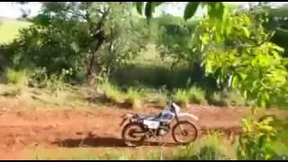 Bufalo ataca moto e nao sobra nada