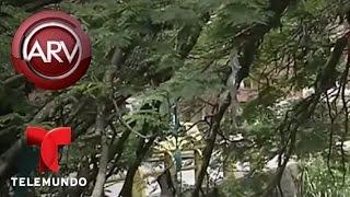 Árbol lleno de sostenes | Al Rojo Vivo | Telemundo