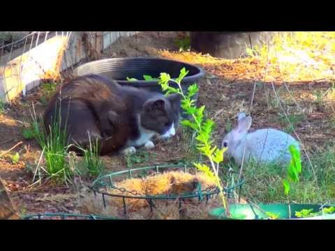 Cat vs Bunny Baby - Funny Fight