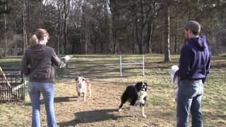 Training Dogs To Not Steal Dg Discs, With Tony Cramer