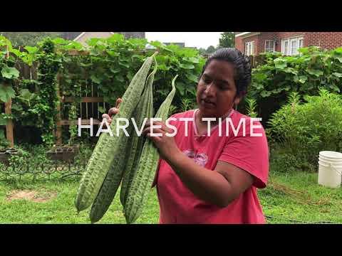 America lo Indian Vegetable Garden Tour-2
