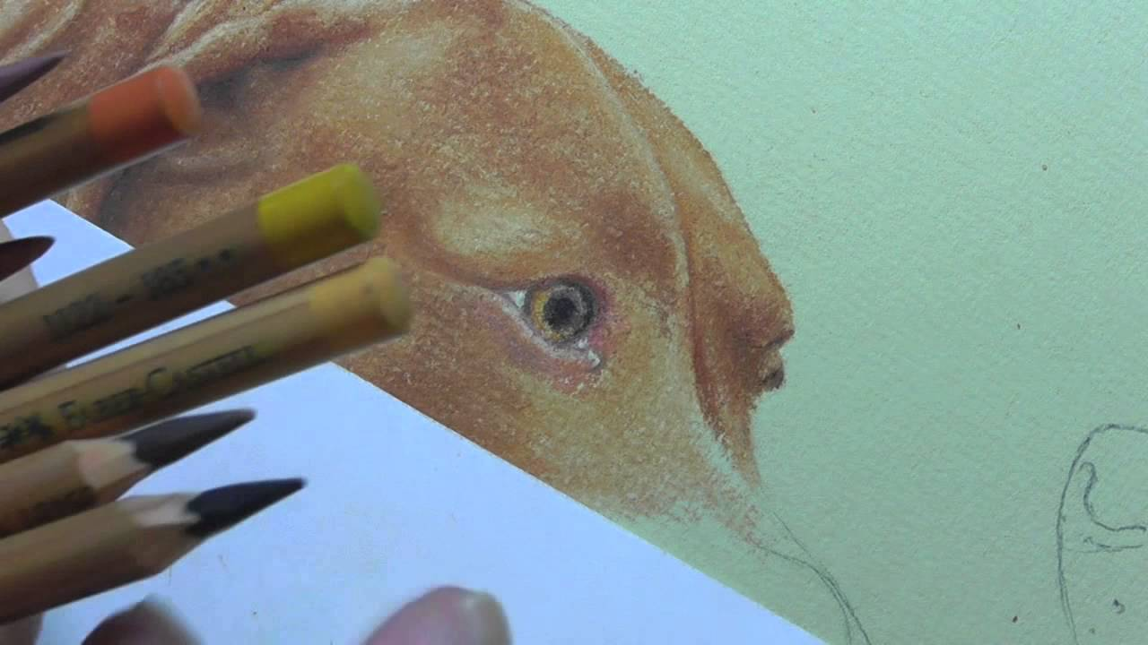 how to draw a dog s eye in pastel pencils youtube