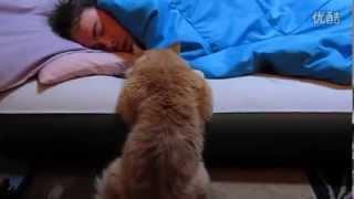 小貓趴床沿 癡望主人起床