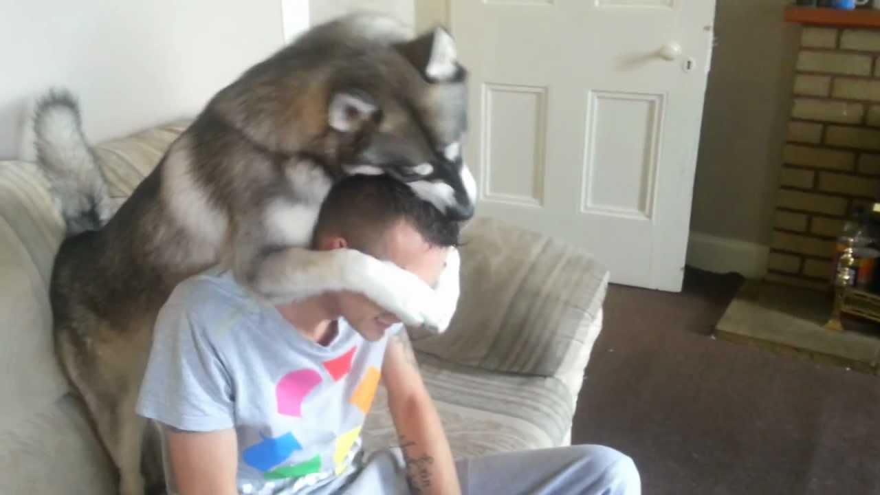 Resultado de imagen para husky and owner