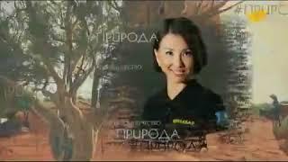 «Символы нашей Родины» вместе с телеканалом «Хабар»