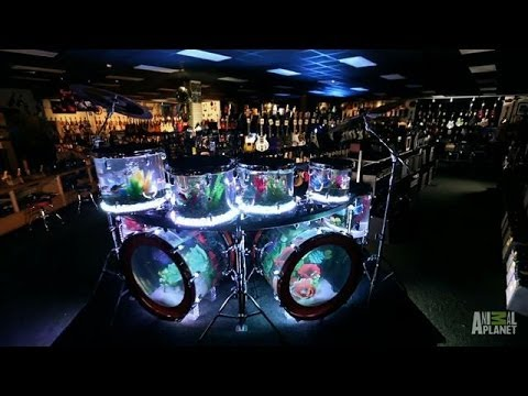 Drum Set Tank | Tanked