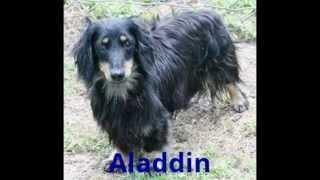 Dachshund Rescue Of Houston - Reliant Dog Show Slideshoe