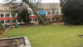 Orkan wirft Baum um