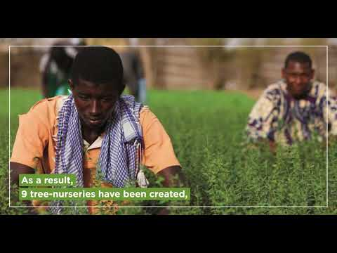 The Great Green Wall program : 10 years later, where are we ?""