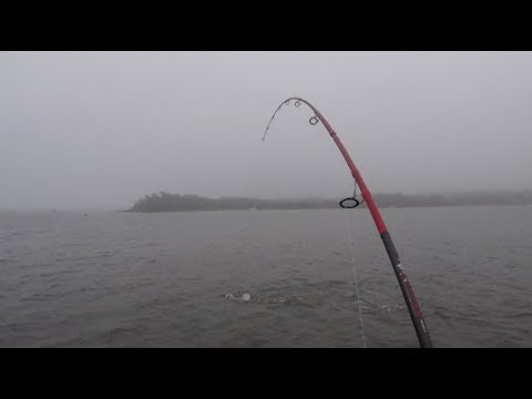 Topwater Striper Fishing SHALLOW Water. Foggy Dusk Bite