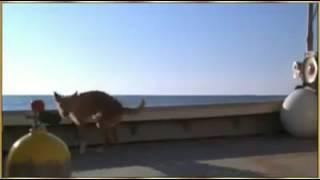 Просто милейшое видео,смотреть всем!!!!!Собака и дельфин