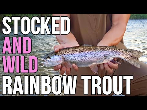 FLY FISHING For STOCKED RAINBOW TROUT- Beaver Creek, VA