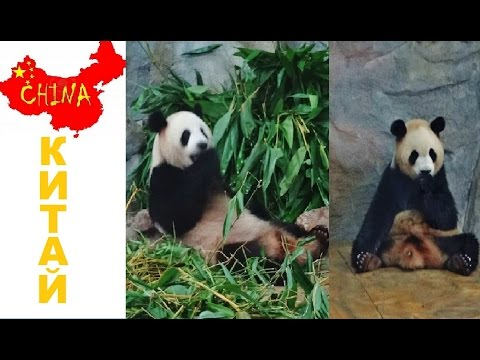 Китай, Панда, Забавный Символ Китая