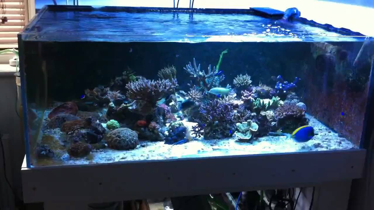 Shallow Rimless Sps Reef Tank Youtube