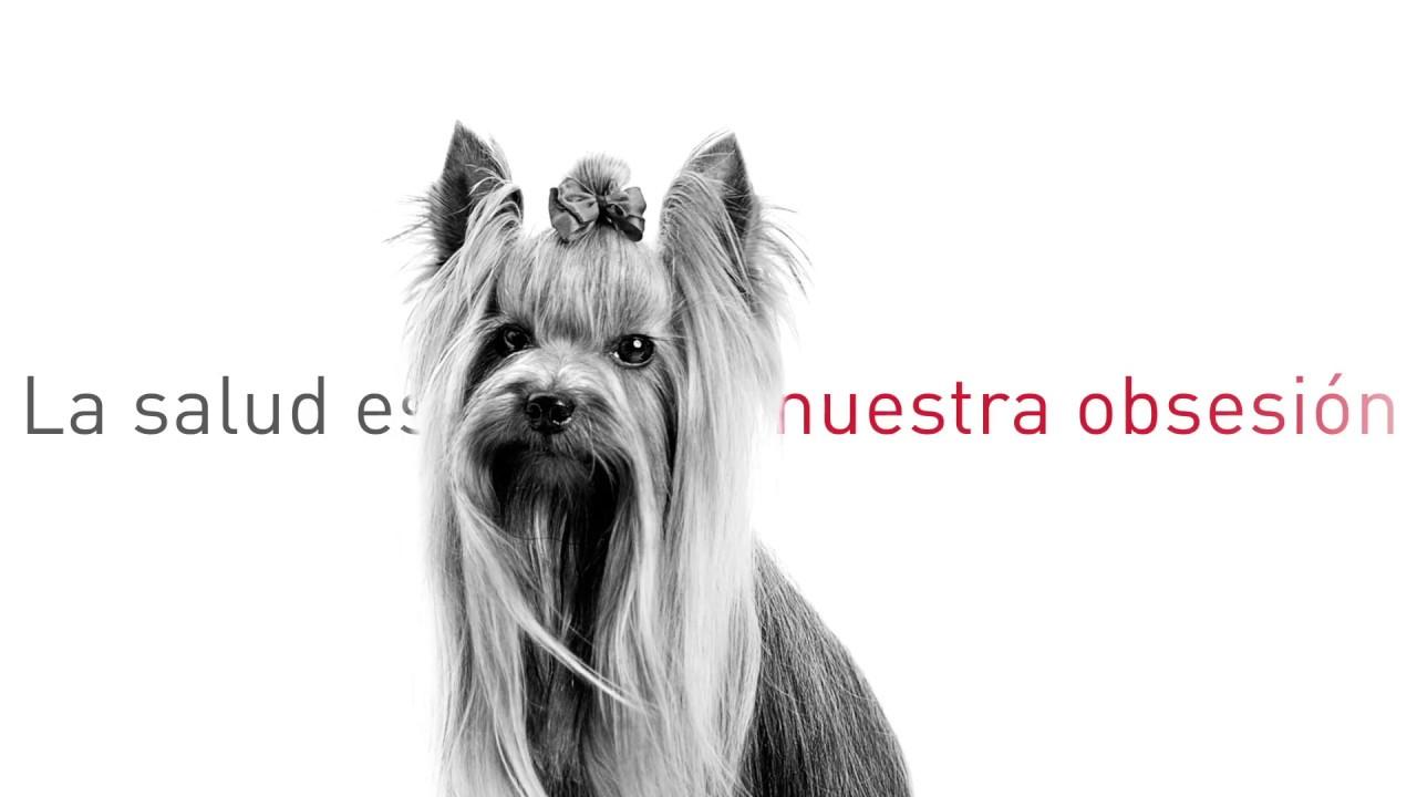 se puede desparasitar a un perro desnutrido