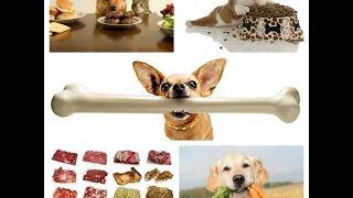 Как и чем правильно кормить собаку бивера или йорка