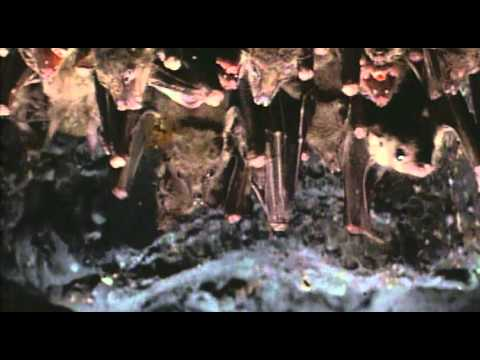"""Cliffhanger 1993"" Theatrical Trailer"