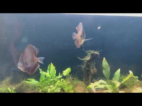 Discuss And Clown Loaches