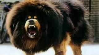 इस कुत्ते के सामने शेर भ…