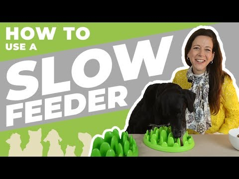 Northmate Green - Slow Feeder Demo and MORE!