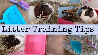 Guinea pig LITTER TRAINING TIPS! | Hamster HorsesandCats