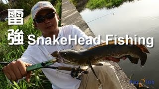 Play Fish 8, Snakehead Fishing, why it miss, miss and miss again 雷強 汪